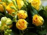 Mawar Kuning